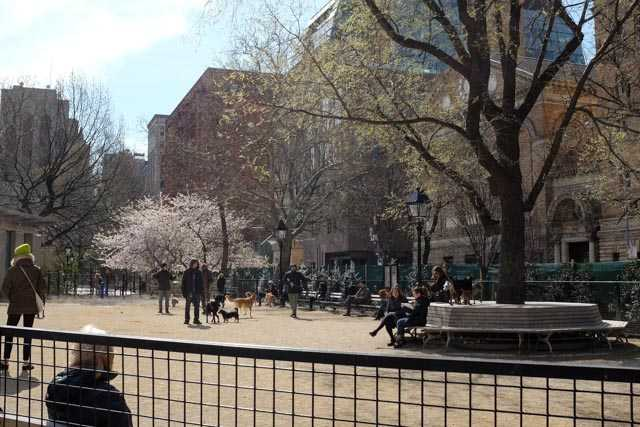 A dogs-and-owners only area in Washington Square Park - wish we have this in Singapore!