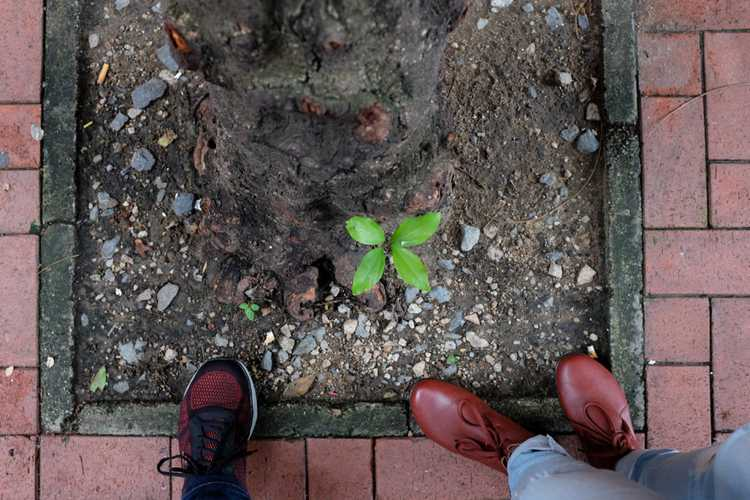 plant springing out from the ground