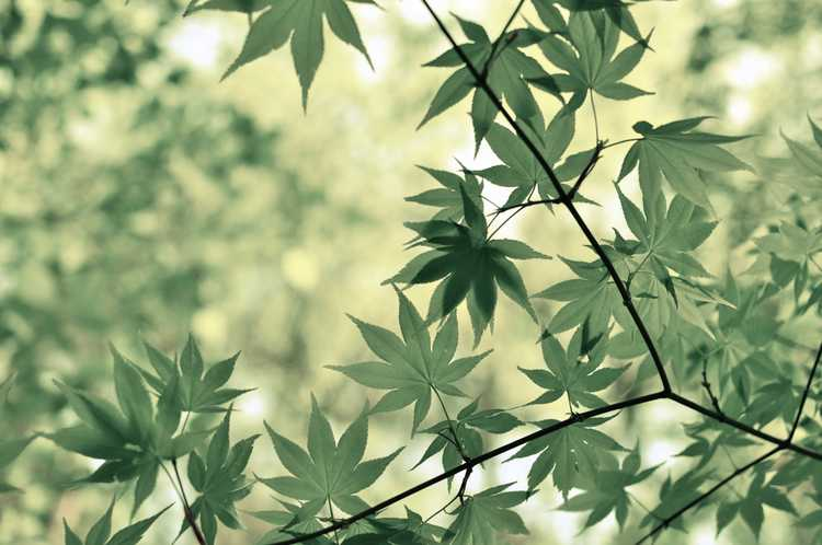 photo of a branch of leaves