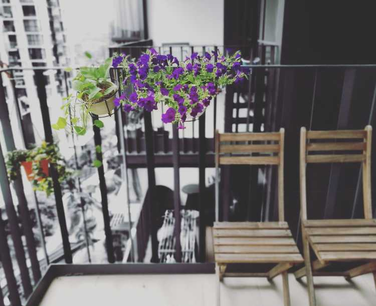 flowering plants in the balcony
